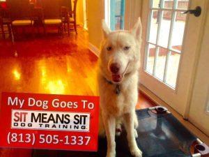 Loki Schroeder the Dog