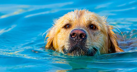 dog-swim-tampa