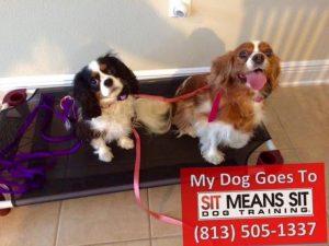 Zoe & Emma the Dogs