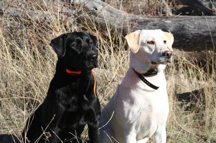 Dog Training Schools In Uxbridge Ontario