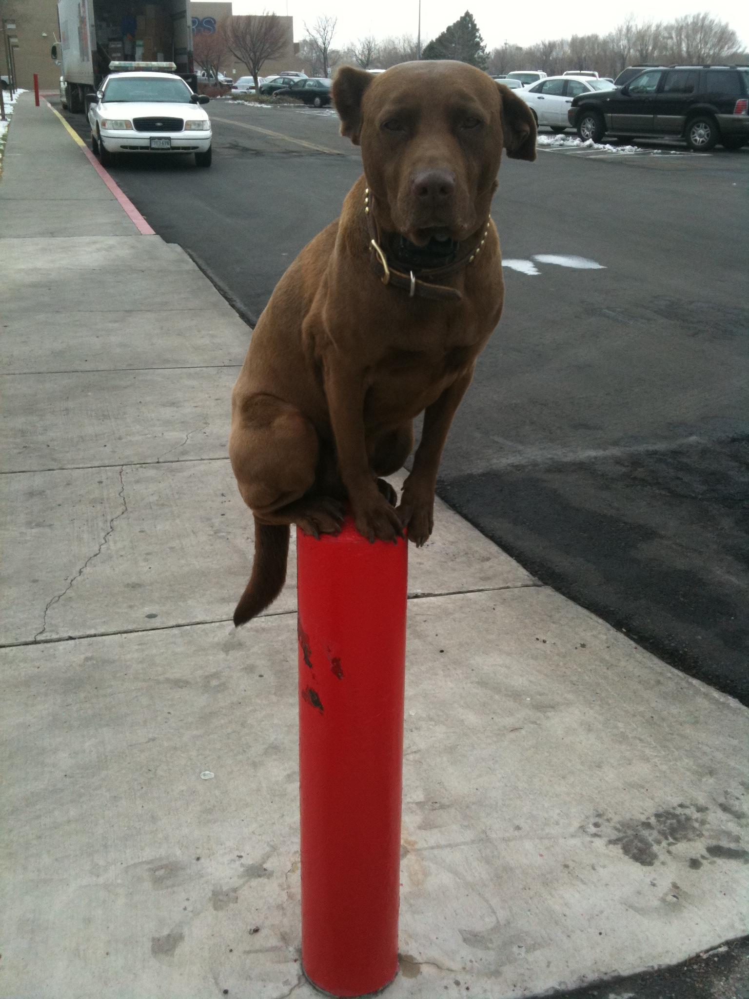 Dog Training Santa Fe Nm