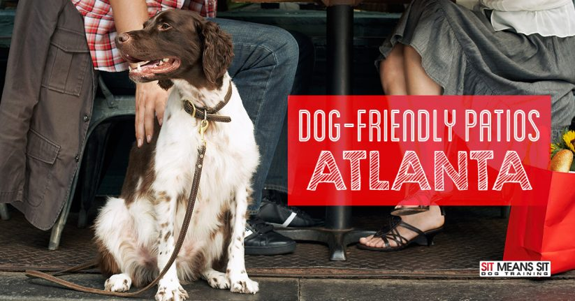 Dog Friendly Patios In Atlanta
