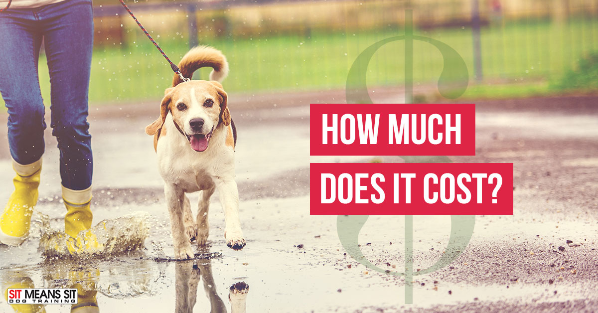 How Much Does Dog Training Cost Sit Means Sit Dog Training