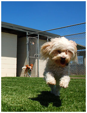 Dog Boarding School Melbourne