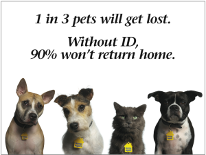 Lost Pet Return Rate