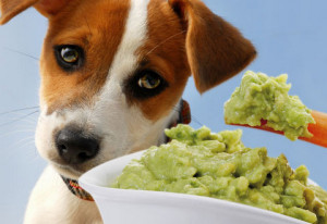 List of foods that are bad for your dog