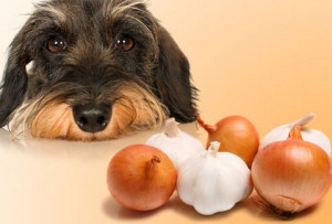 Foods that are dangerous to your dog