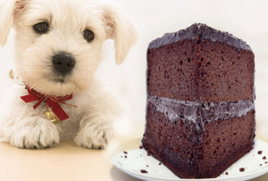 Is chocolate bad for dogs