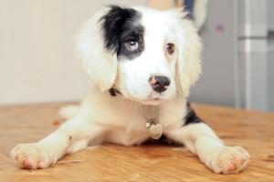 Deaf Dog Picture