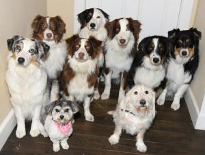 Dog Training San Antonio