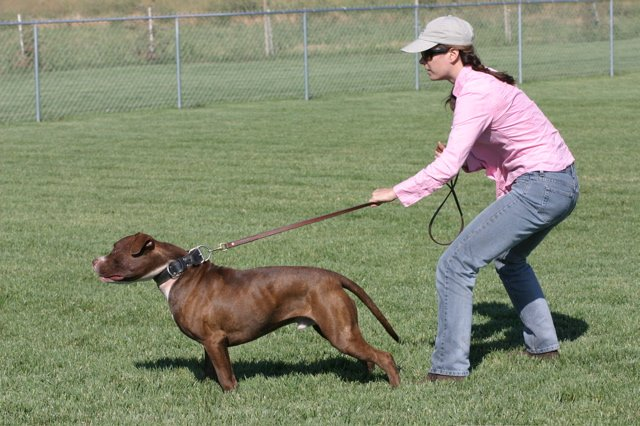 Training Your Dog Off Leash