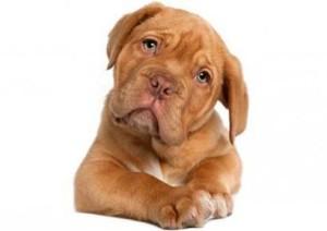 Inquisitive Dog