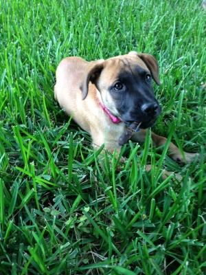 Direwolves also Gps Tracking Device For Cars Free as well 161770063917 further 371524764431 additionally San Antonio Dog Training Black Mouth Cur Mix Loves To Take A Bath Then Run Outside To The Mud. on gps tracker for dogs