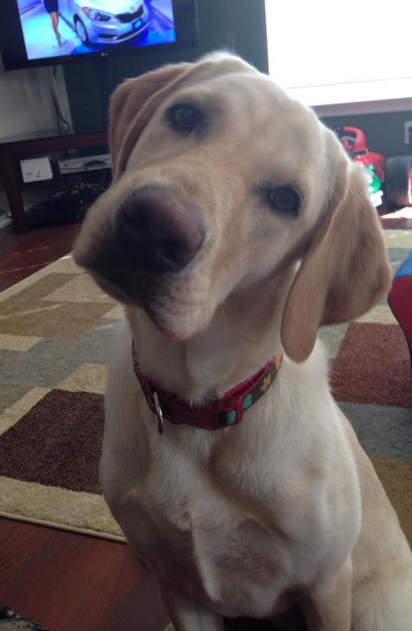 Dog Training Amp Obedience Programs Austin San Antonio Tx