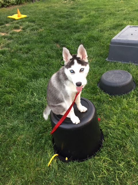 Dog Obedience Training Baltimore