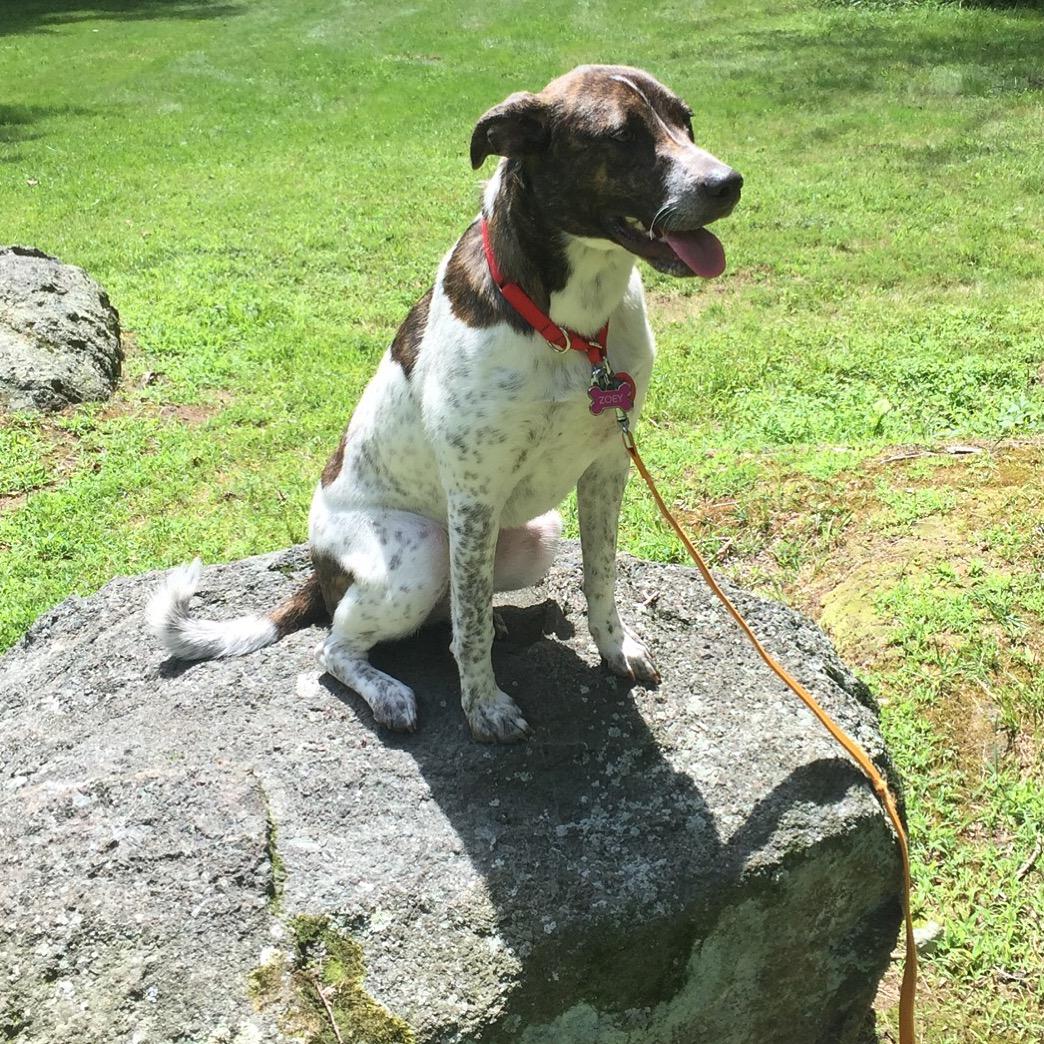 Dog Training Severna Park Md