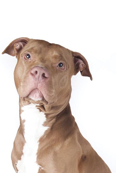 Dog Training In Killeen