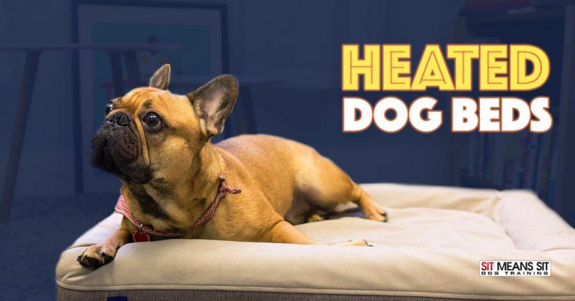 Blog Sit Means Sit Dog Training Chicago