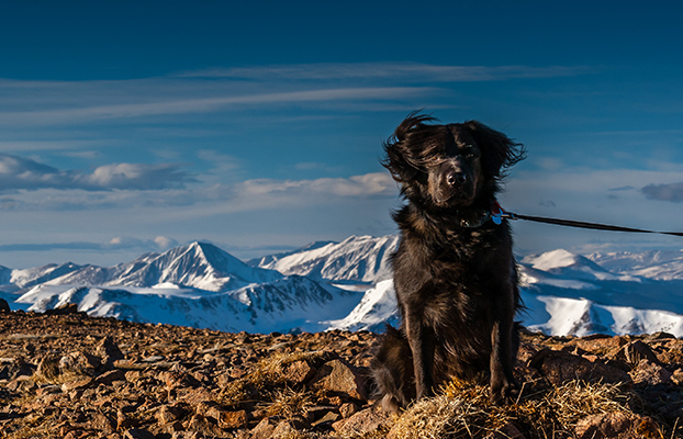 Best Dog Trainers In Colorado Springs