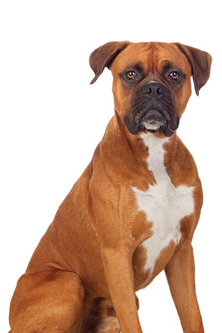 colorado springs dog training