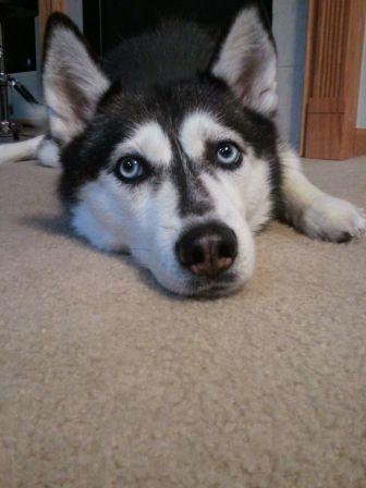 Dog Grooming Hilliard Ohio