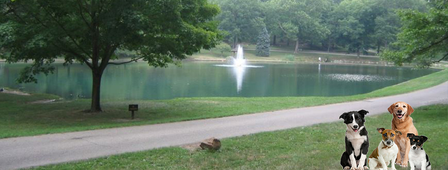 Dog Obedience Training Columbus Ohio