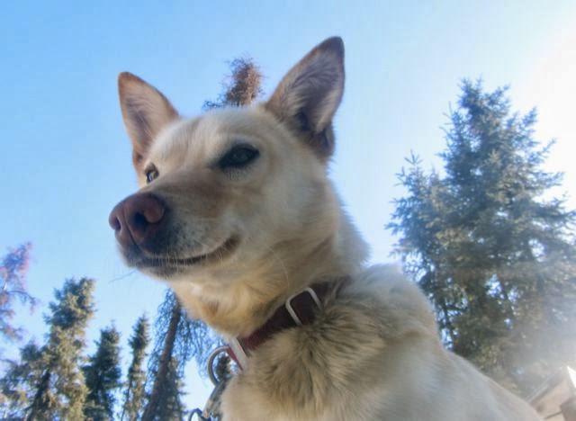 Dog Training For Aggressive Dogs In Columbus Ohio