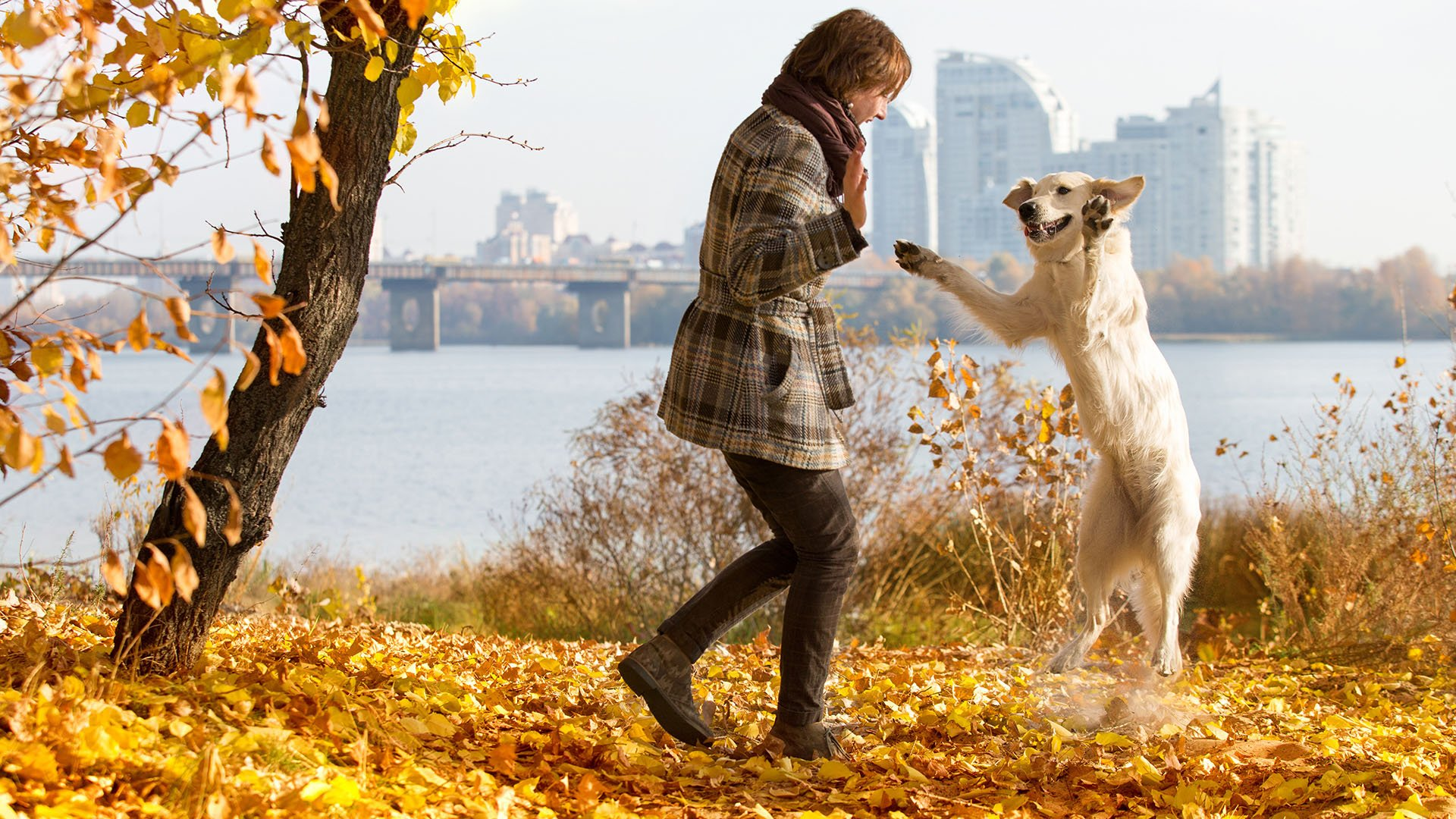 Best Dog Obedience Training in Dallas, TX • Dallas Puppy