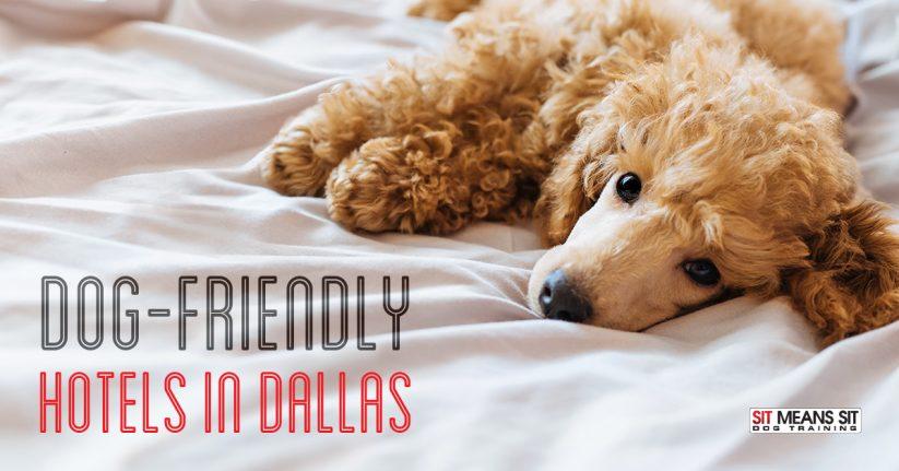 dog friendly hotels dallas