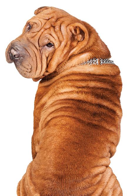 dog training corpus christi