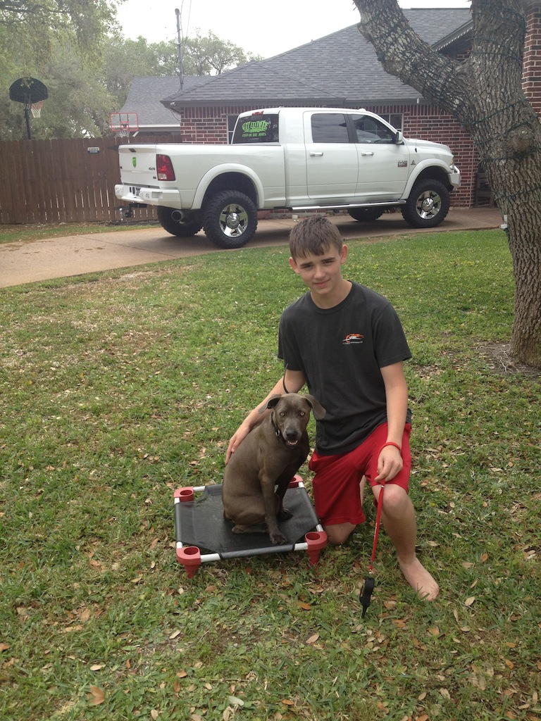 Learning how to train my blue lacy puppy corpus christi dog training jake coulter with bella blue xflitez Gallery