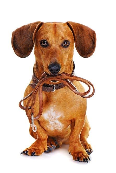 Sit means sit frederick rockville potomac 301 667 0066 about sit means sit dog training solutioingenieria Images