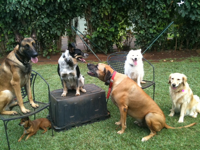 Best Dog Obedience Training Chicago