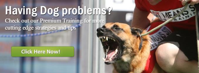 Dog Obedience Training Maui