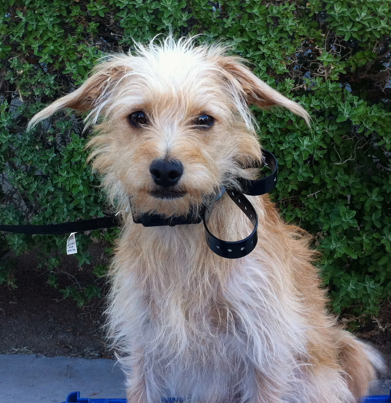 Mixed Terrier Breeds | www.imgkid.com - The Image Kid Has It!