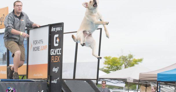 Dog Training Firestone Co