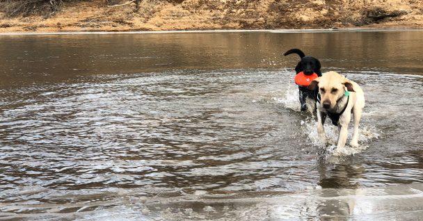 Dog Obedience Training Boulder Co