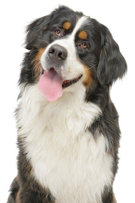 Free Dog Training Classes
