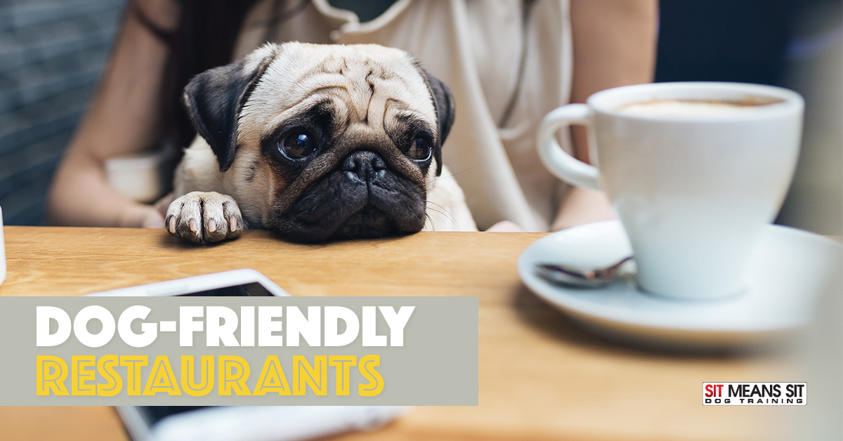 Mckinney Texas Dog Friendly Restaurants Sit Means Sit Dog
