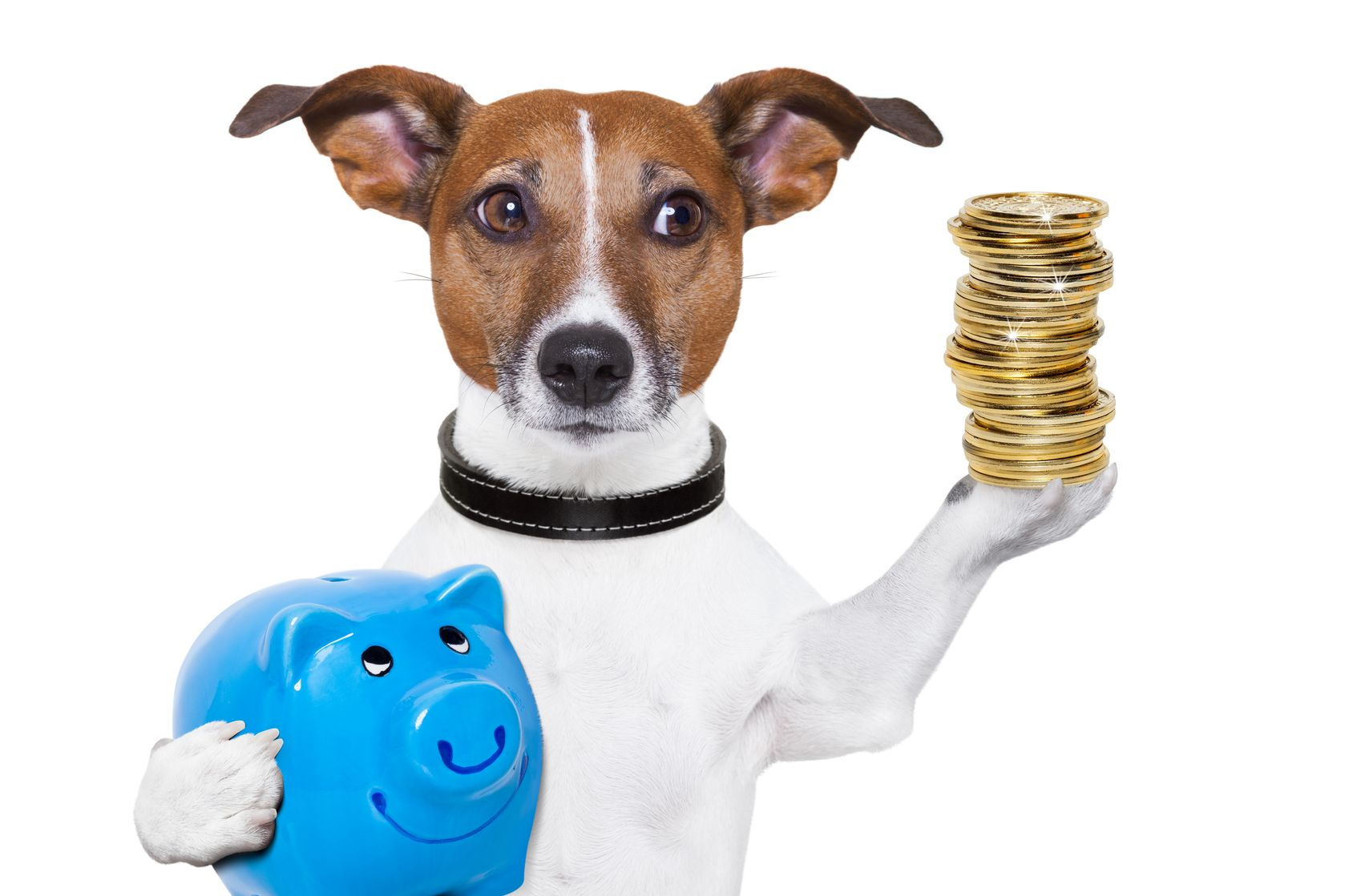 Metro Dog Training Cost