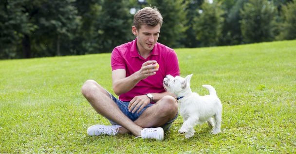 Kennel Club How To Get Started With Dog Training