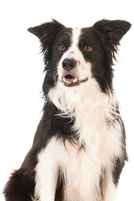 Best Dog Training in Detroit, MI • Detroit Puppy Trainers