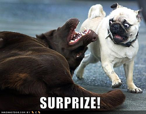 More Funny Dog Memes 01 as well Magic as well Os Pombos O Gato Matreiro E O Cao moreover Funny Pictures With Sit Means Sit Dog Training North Milwaukee 2 further Funny Animal Pictures. on omg scary pitures