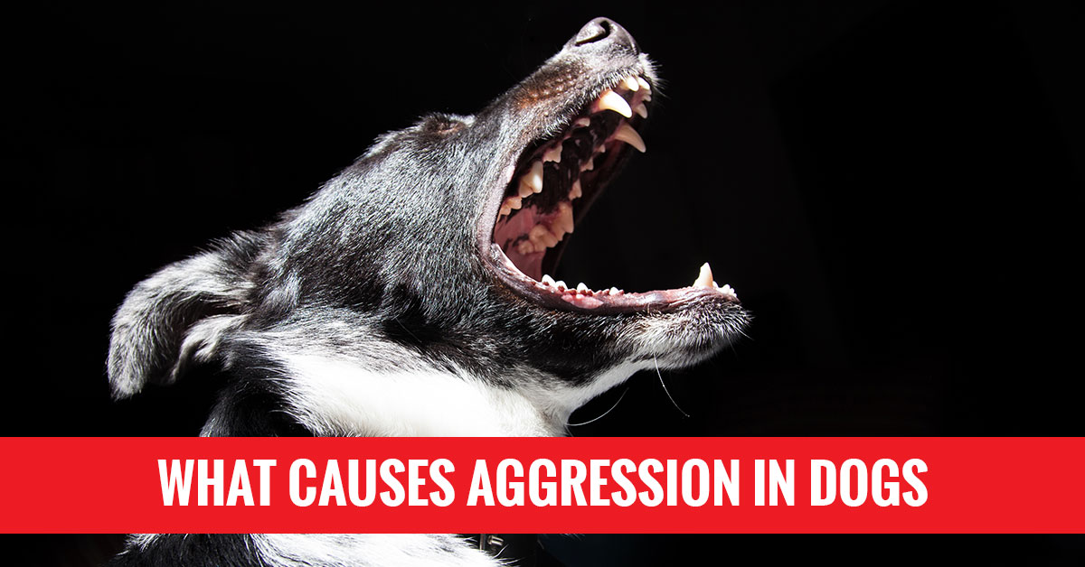 Dog Obedience Classes Milwaukee: What Causes Aggression in ...