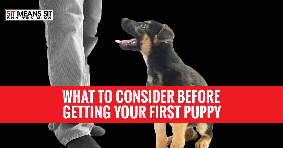 Dog Training In Menomonee Falls Wi
