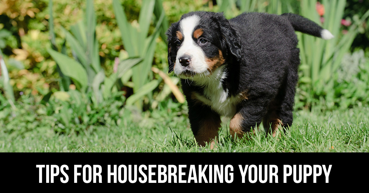 how to house break a dog