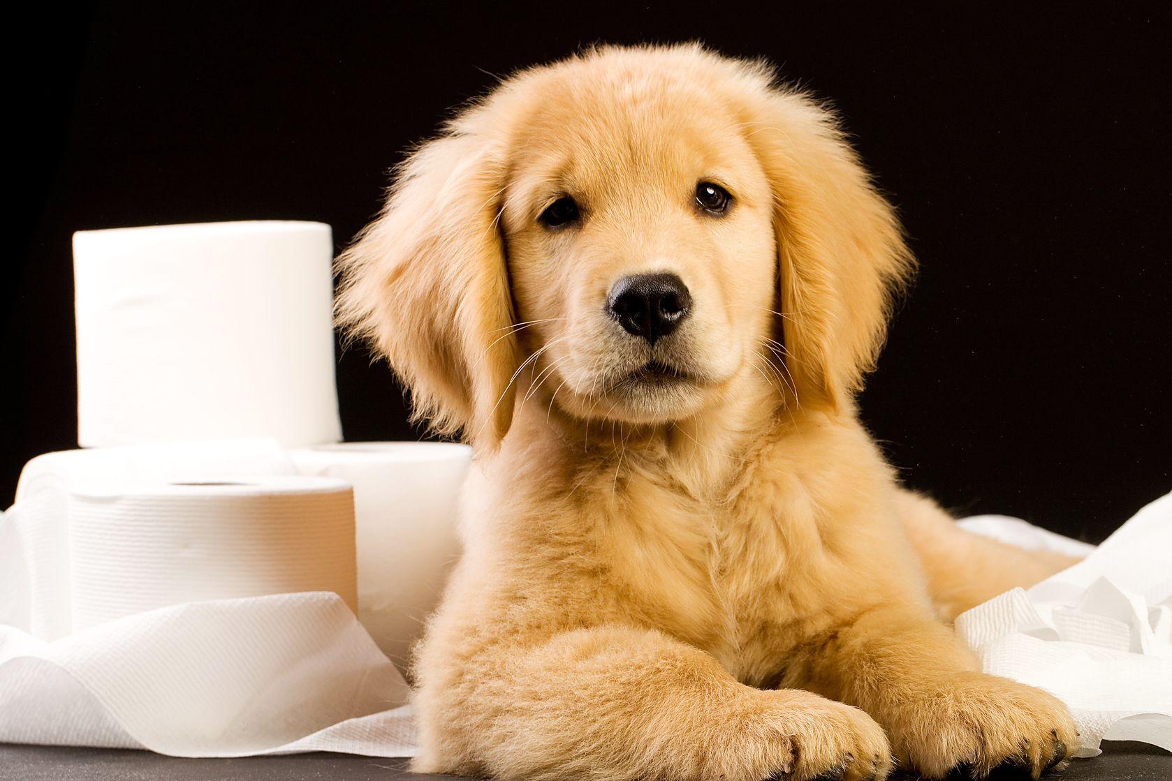 Potty Training South Okc Dog Training