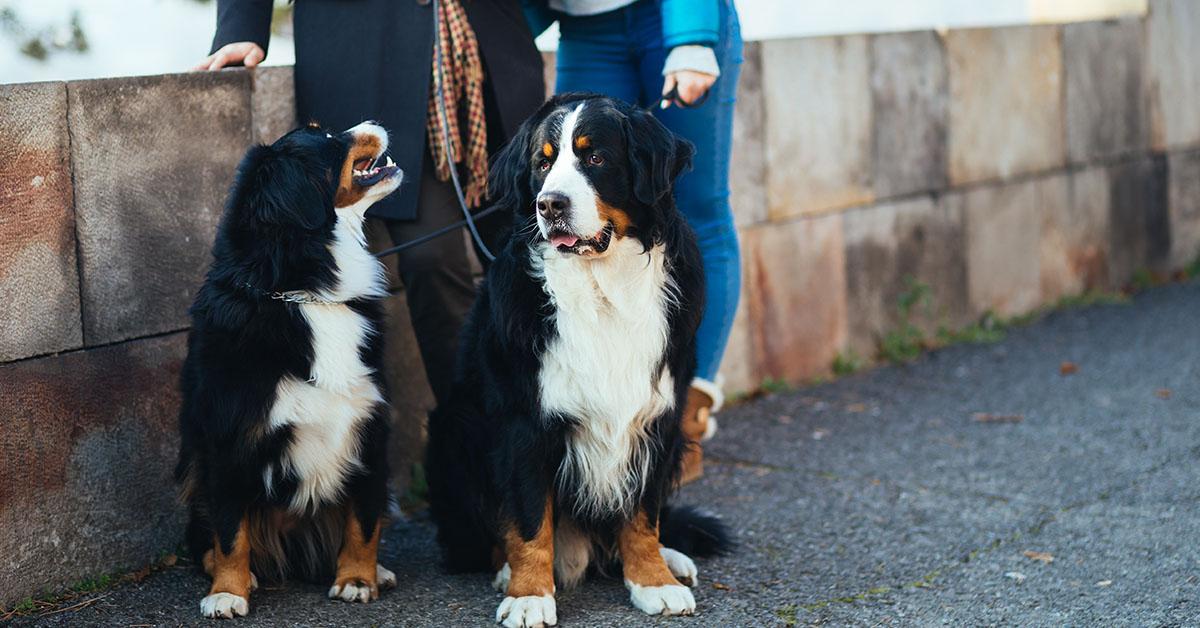 Visit Naples Botanical Garden With Your Dog Sit Means Sit Of Southwest Florida