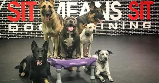 Best Dog Obedience Training in Orlando, FL • Orlando Puppy ...