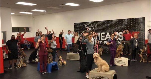 Best Dog Obedience Training in Orlando, FL • Orlando Puppy